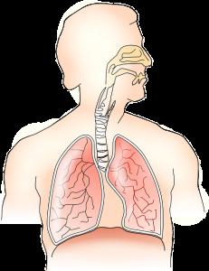 Adem – buikademhaling: Thema Ademhaling